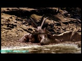 BBC «Прогулки с динозаврами - Баллада о Большом Але» (1 серия) (Документальный, 2000)
