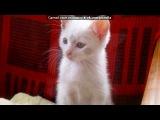 За пять рублей под музыку Элвин и бурундуки vkhp.net - Baby Right Now (ex. Danzel). Picrolla