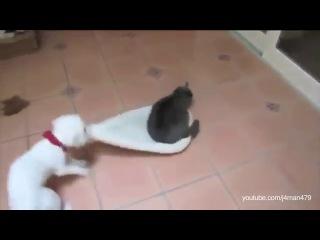 кошачий беспредел  хдд