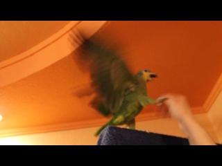 Степка амазон кокнул вазу