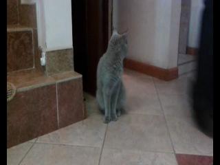 когда-нибудь всё будет хорошо, а пока - фильм ужасов про котика