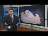 В штате Юта, США по неизвестной причине гибнут белоголовые орланы