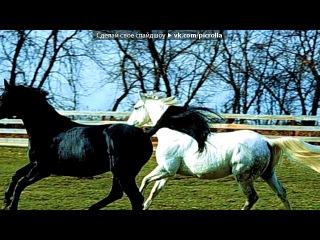 «Все самое дорогое и лучшее - лошади» под музыку Евровидение 2013 -Россия - 5 место - Дина Гарипова What if.... Picrolla