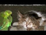 Со стены Смешные фотки животных под музыку Смешные песенки - про кота. Picrolla