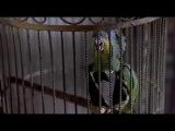 Очень страшное кино 2 (Говорящий попугай)