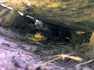 7 of 8 - / Жизнь животных - Плотоядные: Змеи /The Wildlife Specials: Serpent/ 2003