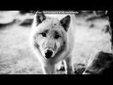 Волк-одиночка под музыку МакSим и Лигалайз - Небо Засыпай. Picrolla