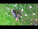 собака-обоссака-кверхулапызадирака люблю его