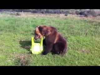 приученный медведь))))))))))