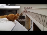 Waffles The Terrible - Worlds Best Funny Cat Fails Epic Jump