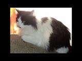 Ж.АГУЗАРОВА- Чёрный кот