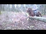 Ветерок/смех/угар/ржака/конь/лошадь/прыгает/