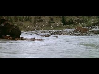 Отрывок из фильма Медведь/ L' Ours (1988) потрясающе!