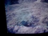 Кошки в ГТА 5 х)нападение пумы на Франклина