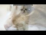 Основной альбом под музыку Твоему животному посвящается(смешная песенка) - Про кота. Picrolla