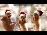 «Картинки» под музыку Цой Анита - Новогодние игрушки.Самоя классная песня про новый год. Picrolla