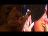 Кот рыжик Мурад