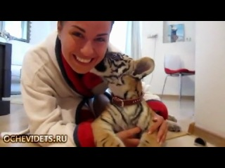 Девушка играет с забавным маленьким тигренком