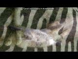 моя зверюга под музыку Детские песни - про кота!=)) vkhp.net - Песня СУПЕРРР смешная!!!!. Picrolla