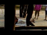 Слоняры в Таи)Улыбнули)