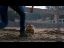 Шикарнейший рекламный ролик от компании Budweiser