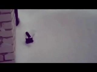 Снежный кот (6 sec)