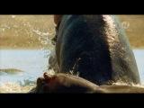 BBC: Симфония мира природы / BBC: Natural World Symphony