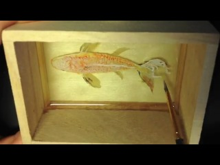 Гиперреалистичные рисунки кен ли (keng lye) - 3d fish.