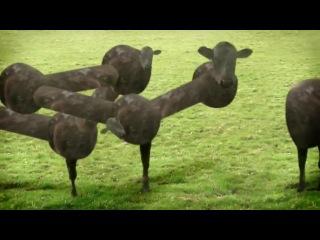 Психотропные коровы