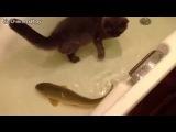 Кот и рыба в ванной