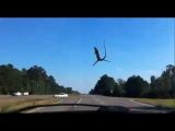 Indiana-Lizard