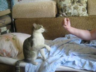 мой кот барсик дерётся с мамкой