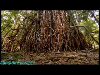 BBC «Прогулки с чудовищами (1) - Новый рассвет» (Документальный, 2001)