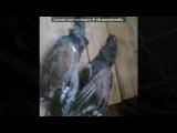 Основной альбом под музыку Евгений Алтайский - Охота на волка. Picrolla