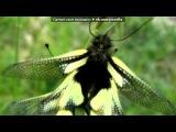 «бабочки)))» под музыку Очень красивая мелодия - из фильма Хатико. Picrolla