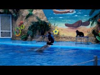 Дельфинарий Немо 1 часть Я в восторге