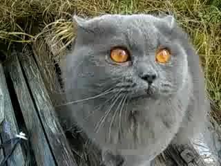 Кот говорит открой глаза
