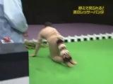 Gaki No Tsukai #761 (2005.06.12)