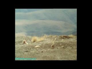 BBC «Живая планета. Портрет Земли (07) - Небо над нами» (Документальный, 1984)