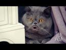 Поющий кот Сальвадор - 2 часть - Salvador singing cat - part 2 - [[163631830]]