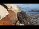 Бердянск 2013. Слив канализации в море!