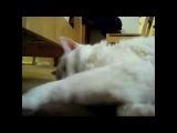 Очень смешная подборка зевающих котов с оригинальной прикольной озвучкой