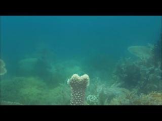 Discovery. Экватор. Серия 5. Индийский океан: Битва за свет