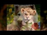 Красивые Фото fotiko.ru под музыку Neon Trees - Animal ( саундтрек из Симс 3 Животные) . Picrolla