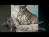 толстячки 3 под музыку ОЧЕНЬ смешная песня - Про кота. Picrolla