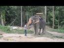 Панганский слоник приветствует нас