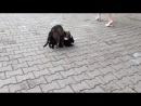 Шок! Коты ебутся
