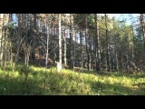 Осенний этюд с окрестностями г. Медвежьегорска. Качество на 720!