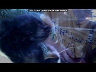 «Видеоальбомы Минутта» под музыку Классика - Очень грустная песня о мирском и вечном. Picrolla