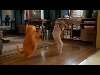 Шаг Вперед 3 Гарфилд танцует с Оди!!!!!! пухленький котик и талантливая соб[[166152742]]